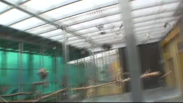 مرکز نگهداری و آموزش طوطی سانان در آلمان 4