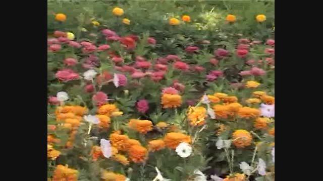 طبیعت زیبای پارک پامچال شهرستان سرایان