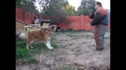 سگ خیلی نگهبان