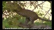 شکار پلنگ- مستند