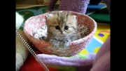بچه گربه بانمک وبازیگوش!!