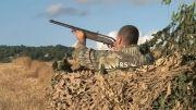 حرکت اهسته تفنگ ساچمه زنی در شکار کبوتر