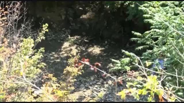 حسین حسینی رکاوندی. تعدادی از پلانهای برنج دم سیاه اصل