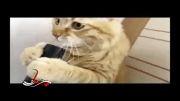 گربه VS جارو برقی!!!!
