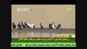 زمستان گذرانی پرندههای مهاجر در تالاب های چهار محال