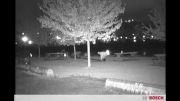 تصویر دید در شب دوربین مداربسته بوش سری XF