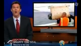 حمله نهنگ به شیر دریایی در برنامه زنده خبری