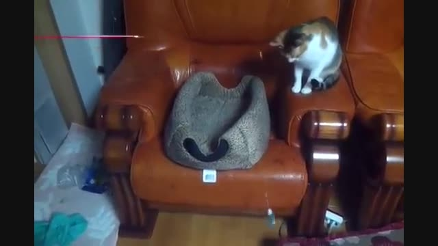 سرکار گذاشتن خنده دار یک گربه توسط گربه ی دیگر...