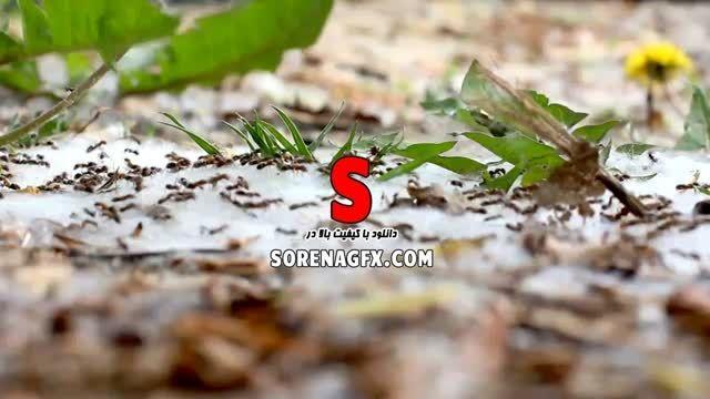 دانلود فوتیج با كیفیت حركت موچه ها در جنگل