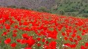 مستند طبیعت و فرهنگ کردستان - زبان انگلیسی