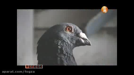 پرنده ، کوروش یغمایی