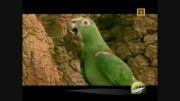 طبیعت دیدنی طوطی ها