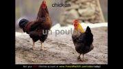 آموزش کلمات فرانسه 19 (حیوانات مزرعه)