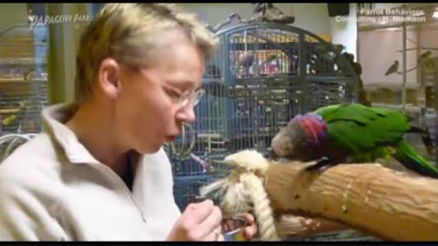 مرکز نگهداری و آموزش طوطی سانان در آلمان 5