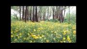 طبیعت ورچه/بهشت2