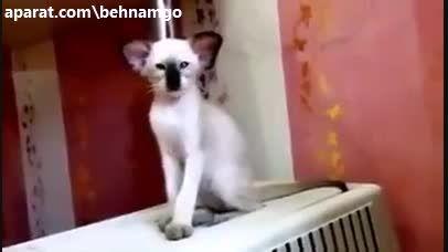 گربه عجیب الخلقه.....!