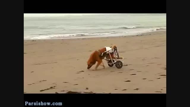 نجات سگ ها و پرستاری از آنها