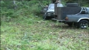 ازاد کردن ببر سیبری  در جنگل  ( ببر سلطان جنگل )