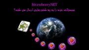 وب سایت Strawberrynet.com محصولات خود را به چه کشورهایی ارسال می کند؟