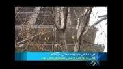 ساخت و ساز غیر مجاز در بستر رود جاجرود تخریب می شود
