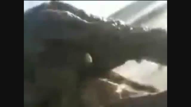 خطرناکترین حیوانات دنیا: !!! دارای صحنه های دلخراش!!!