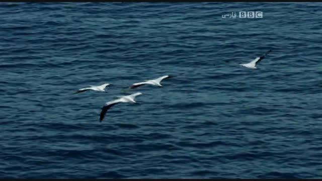 مستند سفر بر بال پرندگان با دوبله فارسی- آفریقا