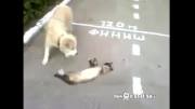 گربه بازیگوش (کلک زدن به سگ )