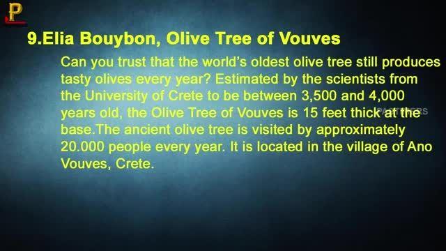 10 تصویراز درختان شگفت انگیز در جهان!!