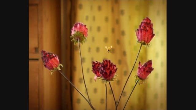 انیمیشن زندگی حشرات (Minuscule) قسمت 61