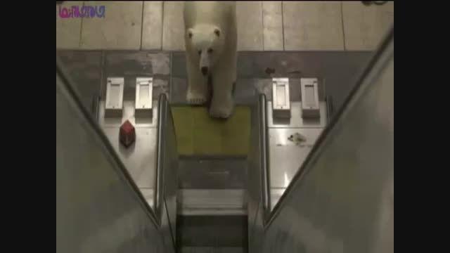 خرس قطبی دو و نیم متری در متروی لندن !