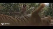 Roar Tigers Of The Sundarbans VFX