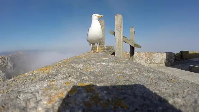 فیلم برداری هوایی مرغ دریایی بعد از قاپیدن دوربین توریس