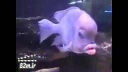 تولد یک ماهی بسیار عجیب شبیه انسان!!!!!!!!