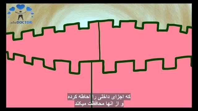 انیمیشن مبارزه بدن در مقابل ویروس ها(جالب و آموزنده)
