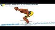 حرکات بدن سازی بازو - Triceps kickbacks