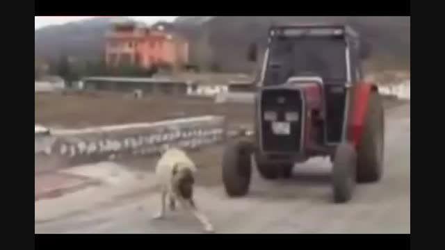 قدرت بدنی فوق العاده سگ كانگال