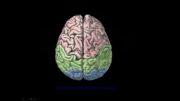 آناتومی سیستم عصبی
