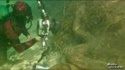 غول پیکرترین مارهای جهان