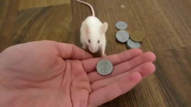 موشه پول میده غذا میگیره
