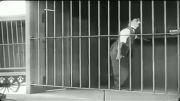 چرلی چاپلین و شیر باغ وحش