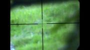 شکار خرگوش با تفنگ بادی (pcp)