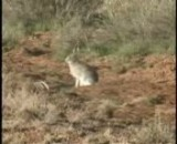 تیر خوردن خرگوش