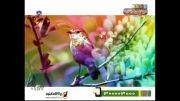 آهنگ زیبای برقص آ محسن چاوشی در شبکه نسیم