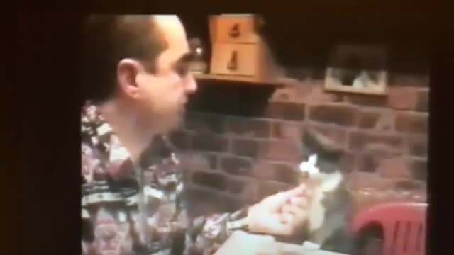 Cat speaking sign language
