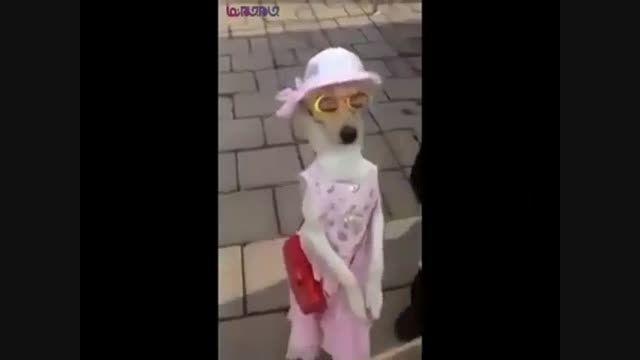 سگ اصیل-گردش تفریح قدم زدن+فیلم کلیپ گلچین صفاسا
