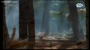 همه چیز در مورد ببر ( پهلوان جنگل )