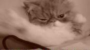 گربه لوس لوس!!!