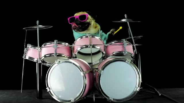 Dog is playing drums - Metallica: Enter Sandman