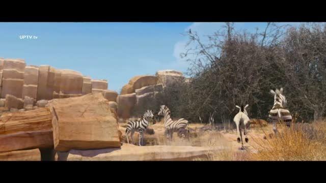 انیمیشن کره الاغ خوشتیپ - خومبا دوبله فارسی و کیفیت HD