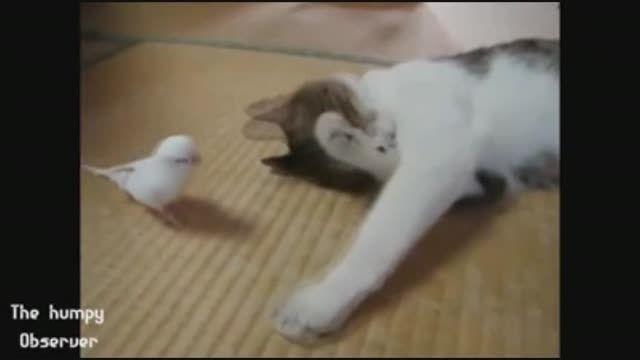 رفتار جالب حیوانات